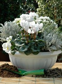 In vaso fiori e profumi per l\u0027inverno