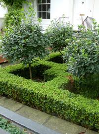un piccolo cortile trasformato in giardino - - giardinaggio.mobi - Un Piccolo Giardino Fragrante