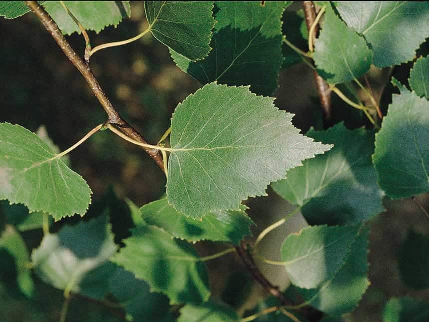 Come Arbusti Da Giardino Foto Di Giardino Idee