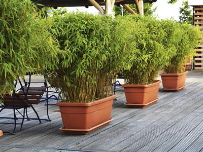 Piante da terrazzo - Elenco piante - Giardinaggio.mobi